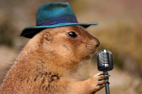 歌っている動物