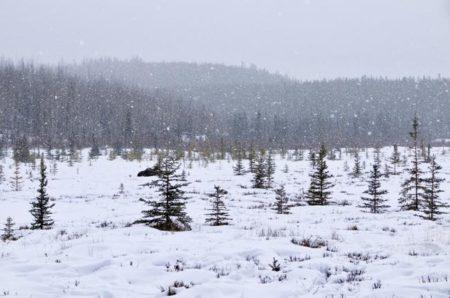 カナダ,ユーコン準州,ホワイトホース,ワーホリ,タキニ温泉,ユーコン自然動物保護区