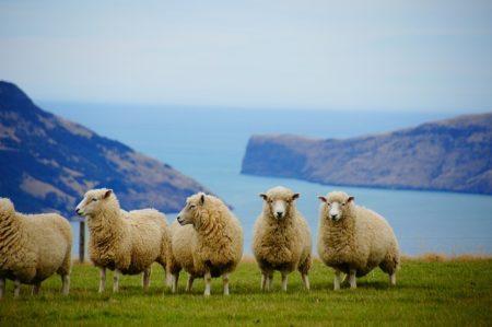 ニュージーランド,ワーホリ,決意表明